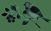 Footer Porte Italia Bird Verde