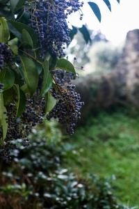 grapes-image